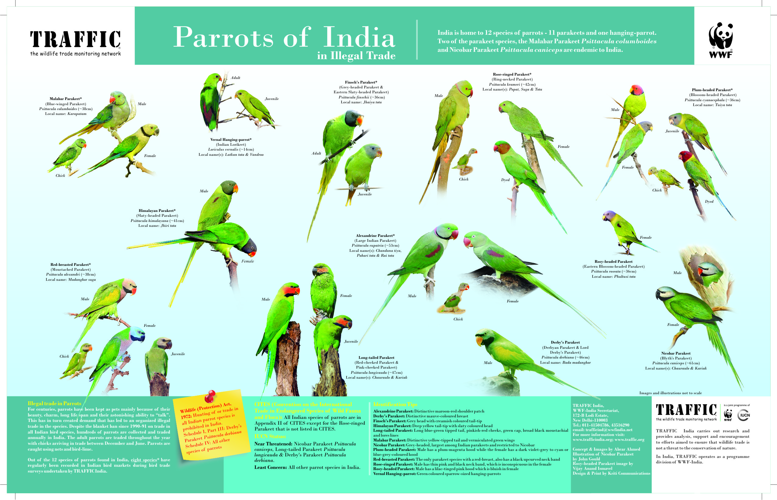 Traffic Helps To Claw Back Illegal Parrot Trade In India Wwf India