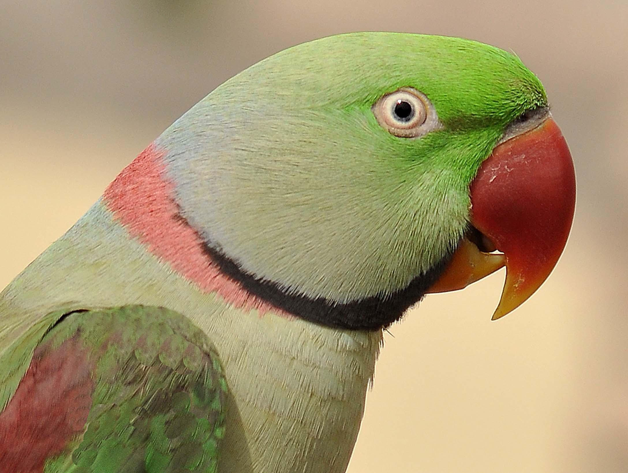 PARROT BIRD NAME